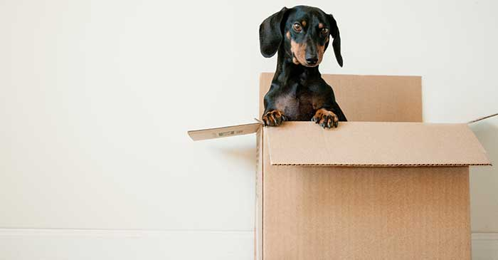 From Novi to West Bloomfield We Can Help You Move!
